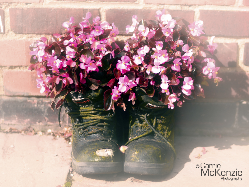 begonias, begonias in boots, flower, plant, garden, horticulture