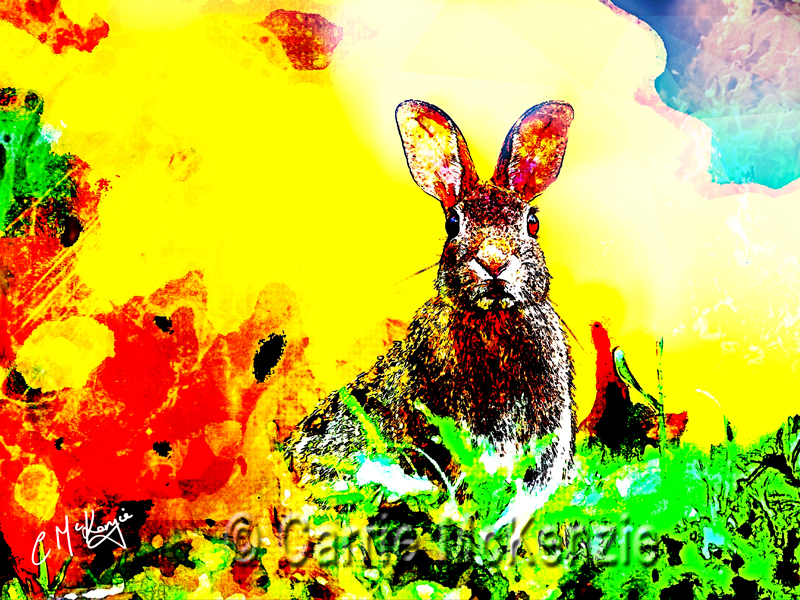 rabbit, rabbit pop, animal, hare, wildlife, nature, countryside, pet