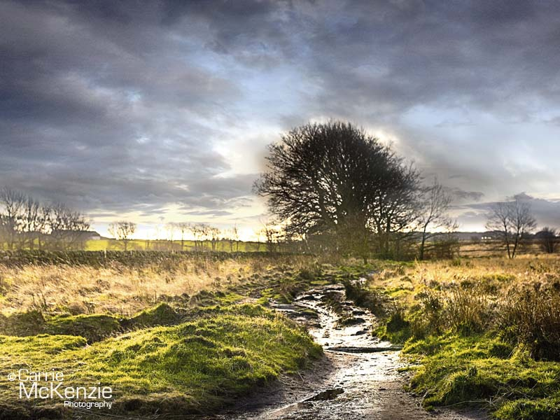 norland brook, yorkshire, landscape, countryside, yorkshire photography, calderdale
